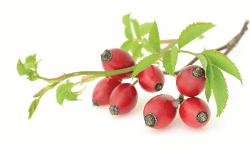 infusion aux fruits radieuse tisane bio aux fruits églantiers baie